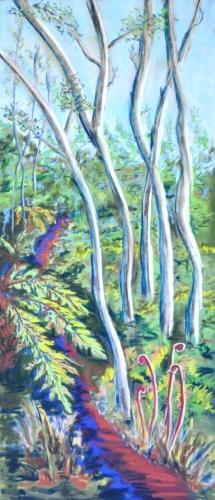 Ohia Forest Path / 442