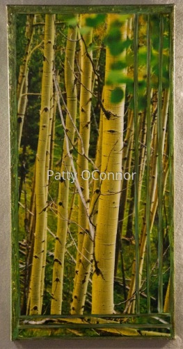 Summer Aspens ( Slender View)