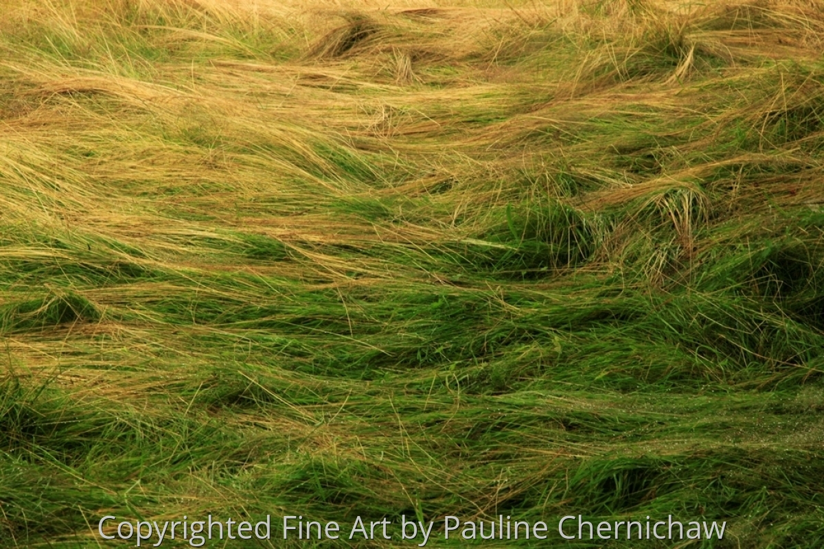 Monhegan Grass (large view)