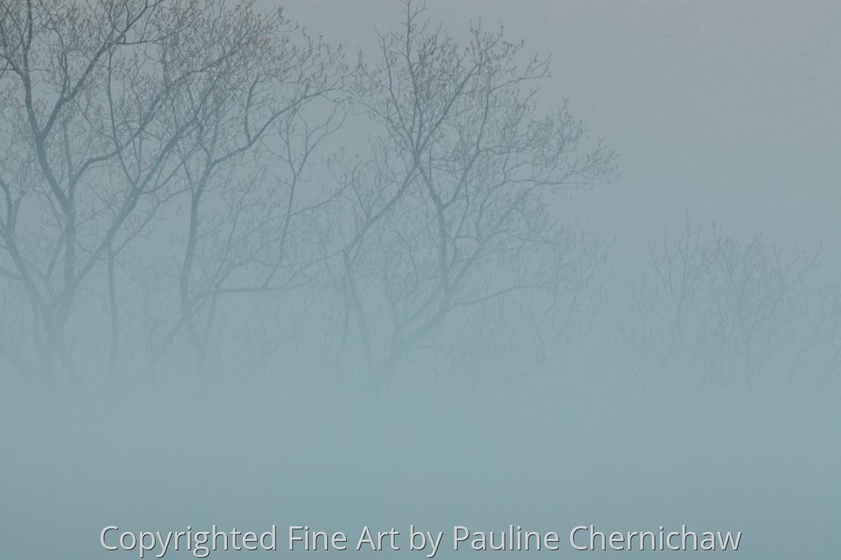 Spring Fog at Allison Park (large view)