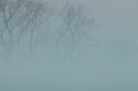 Spring Fog at Allison Park (thumbnail)