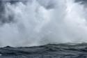 Whale Mist (thumbnail)