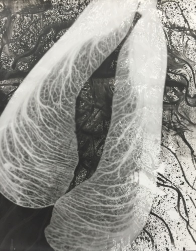 Samara Swim (large) by Paul Bloomfield