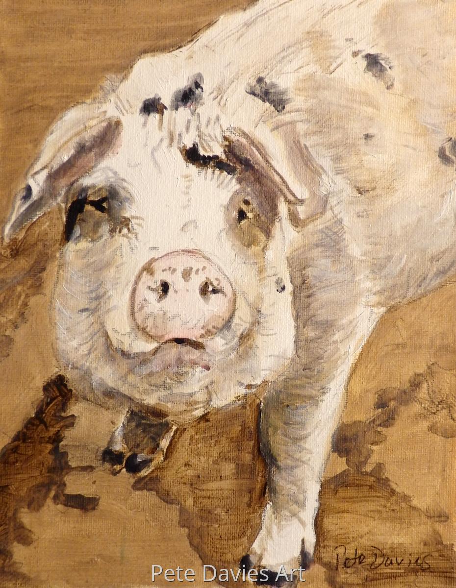 A Gloucester Black Spot Pig (large view)