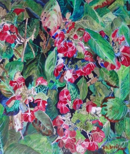 Lace Cap Hydrangea by Pete Davies Art