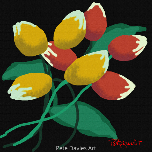 Tulip Heaven by Pete Davies Art