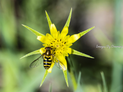 Flower with Bee by Images By Downing