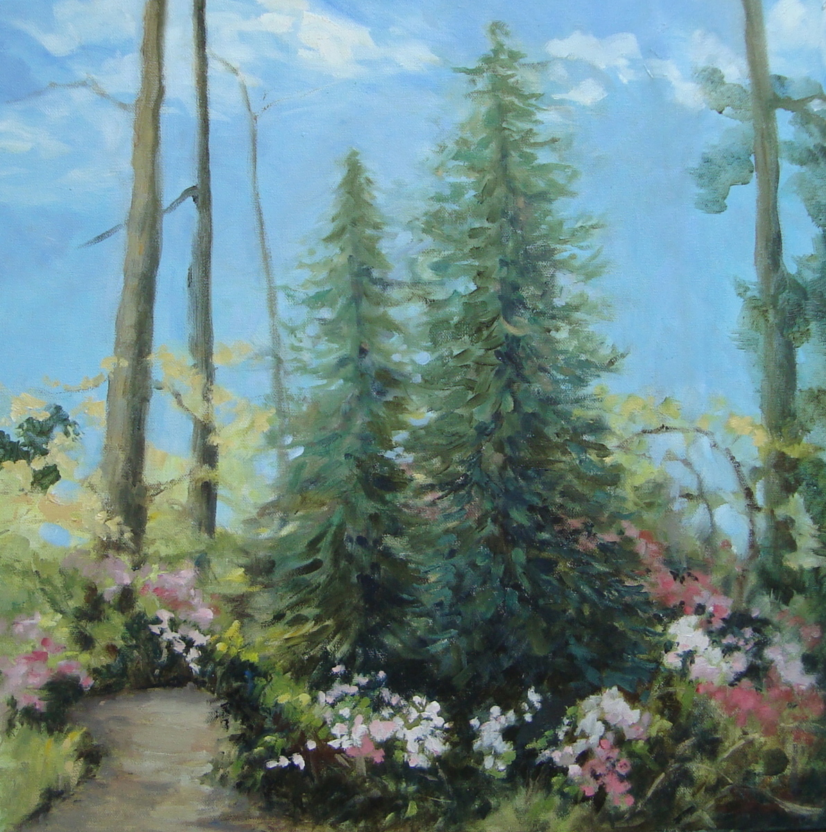 Leyland Cypress by the Path (large view)