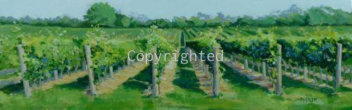 Vineyard Colors and Shadows
