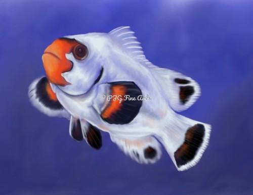 Miami white Clown Fish