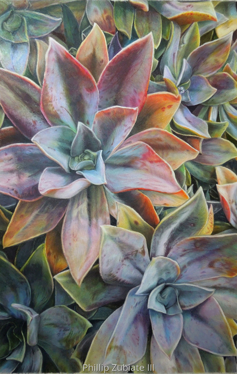 Malibu Succulents (large view)