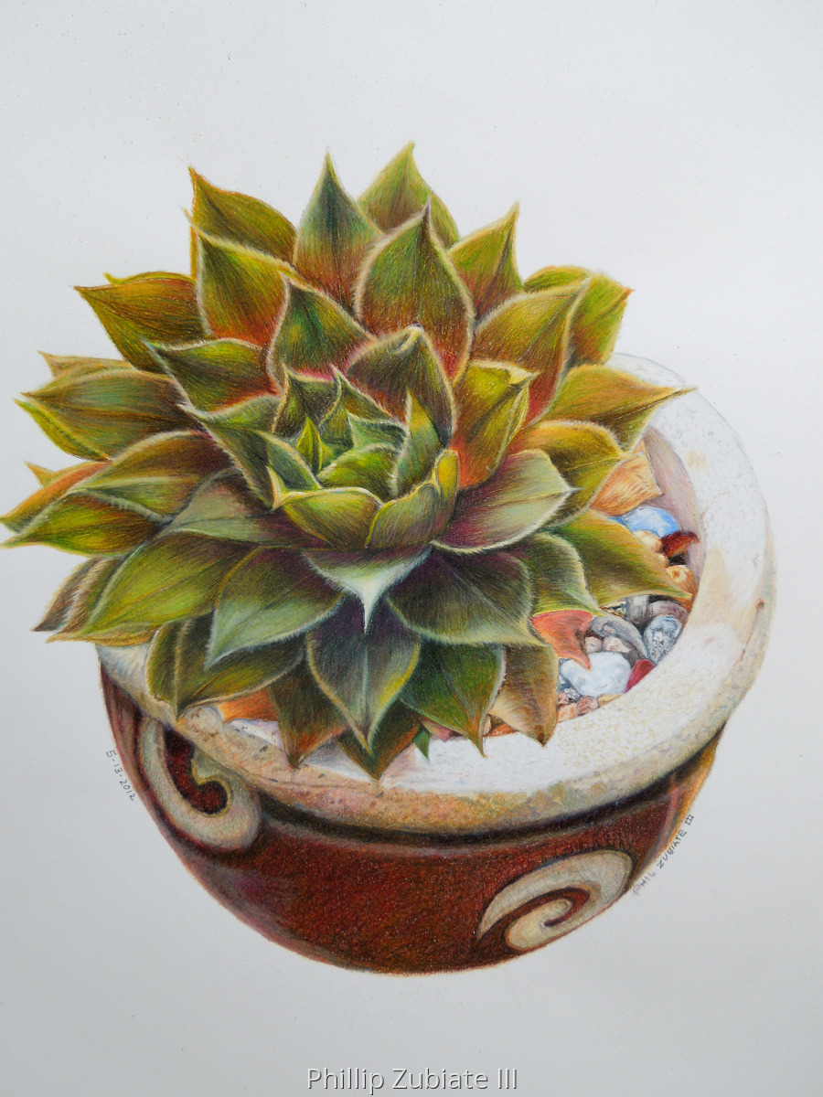 Succulent Series 1 (large view)