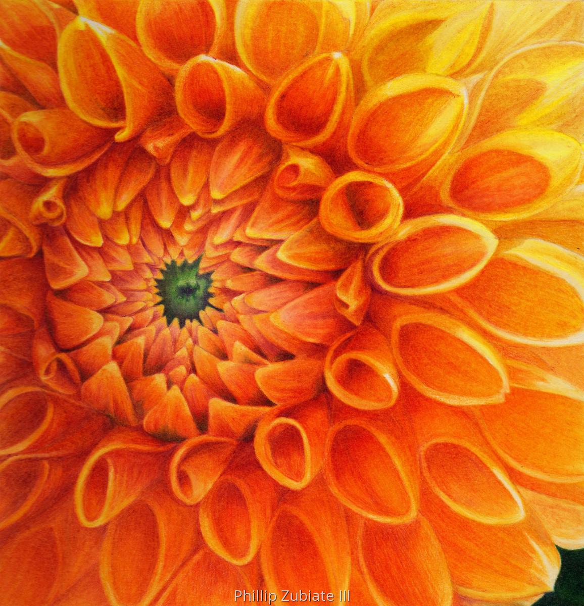 Yellow Orange Dahlia (large view)