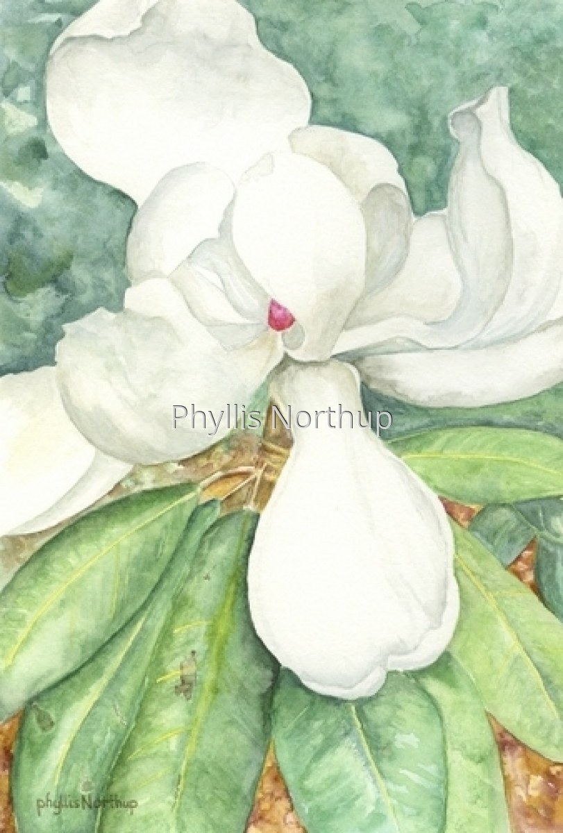 Magnolia (large view)