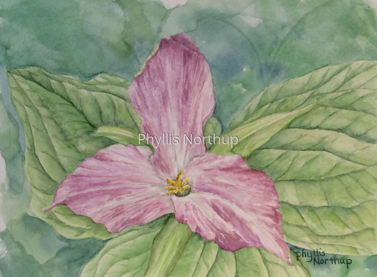 Painted Trillium (large view)