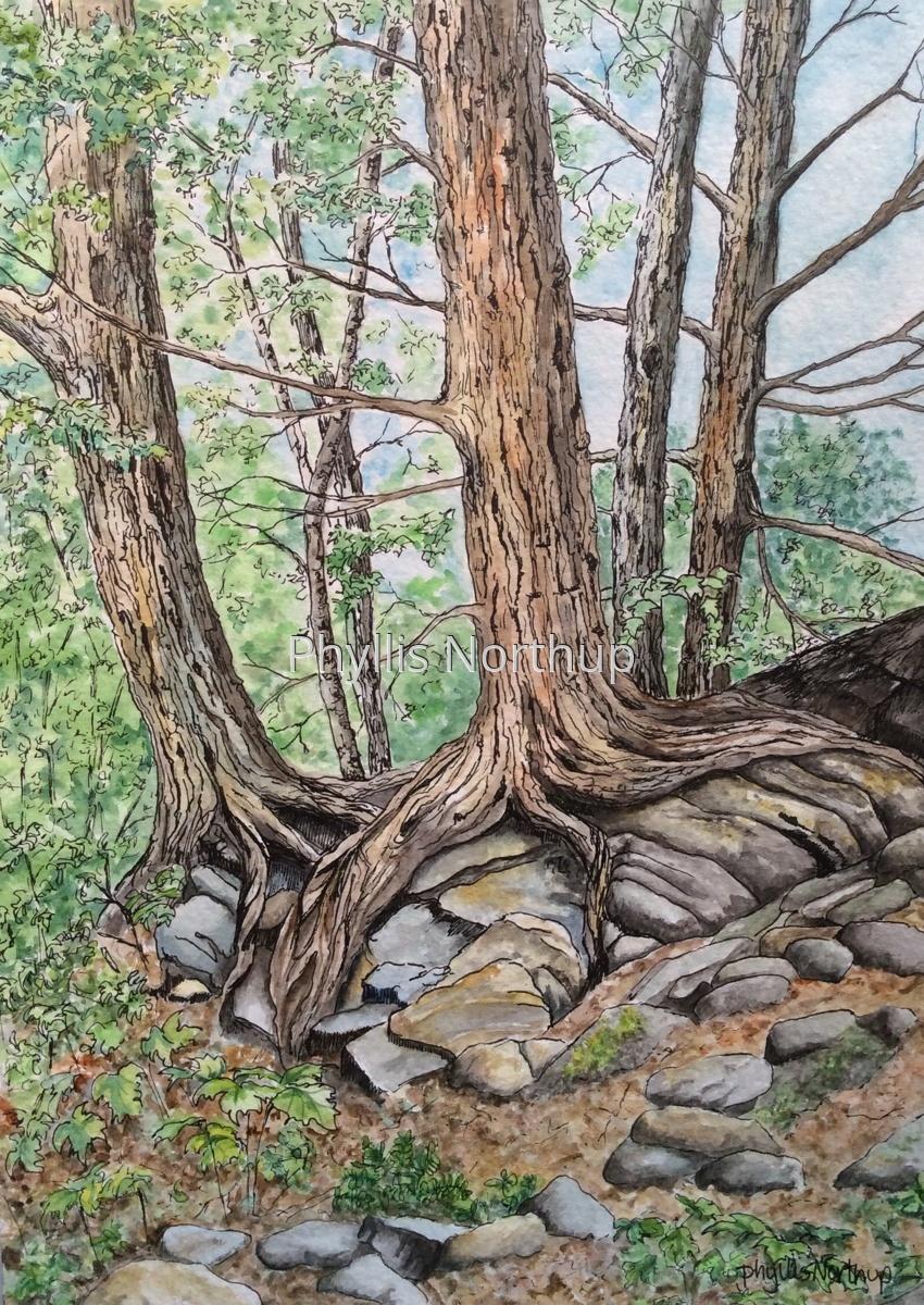 Trees Hugging Rocks (large view)
