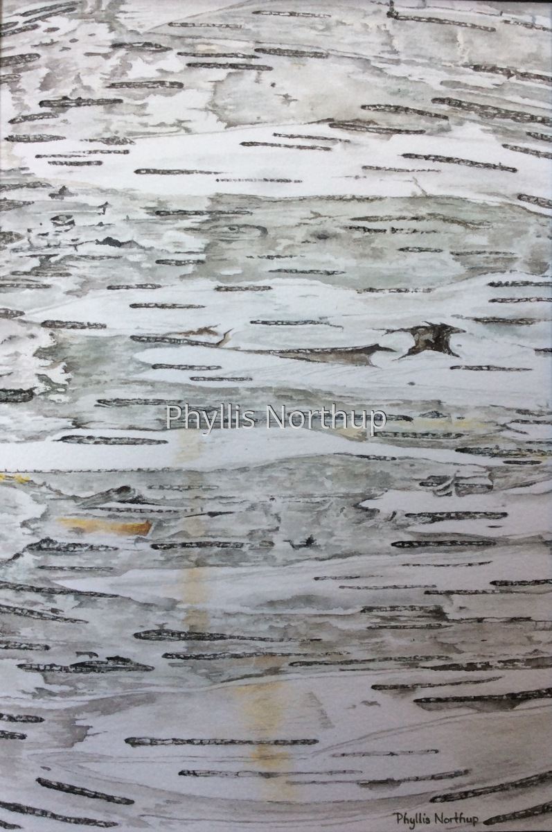 Birch Bark (large view)