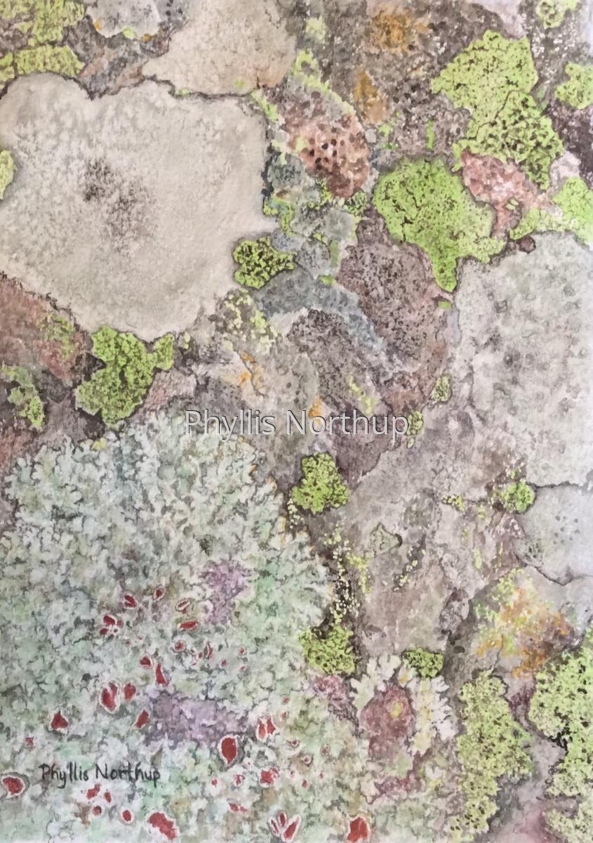Lichen (large view)