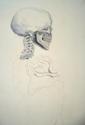 Skeletal Study (thumbnail)