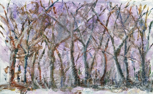 The Forest Winter