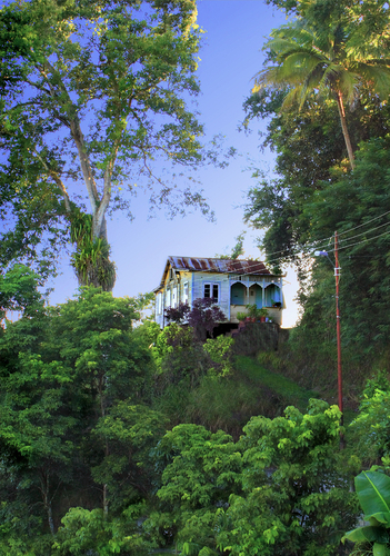Forest house Tobago