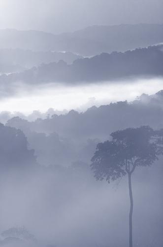 Grey Mist