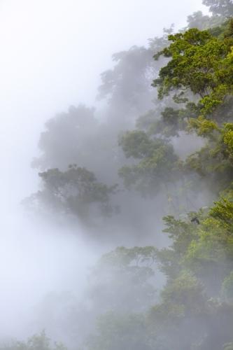 Rain Mist