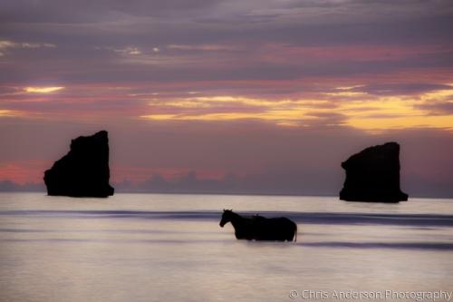 Wild Horses1