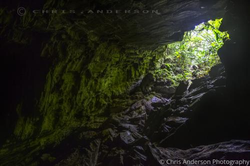 Aripo Oilbird Cave