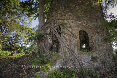 Mill Tobago1