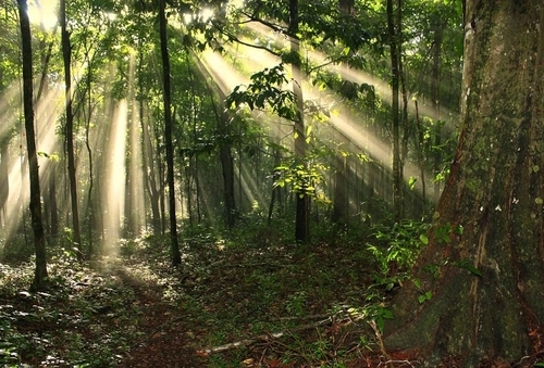 Forest Rays 2