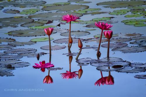 Nariva Pond