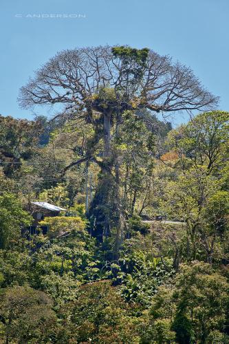 Tree of Life Tobago