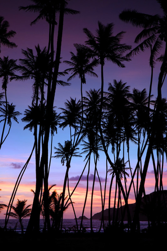 Mayaro sunrise