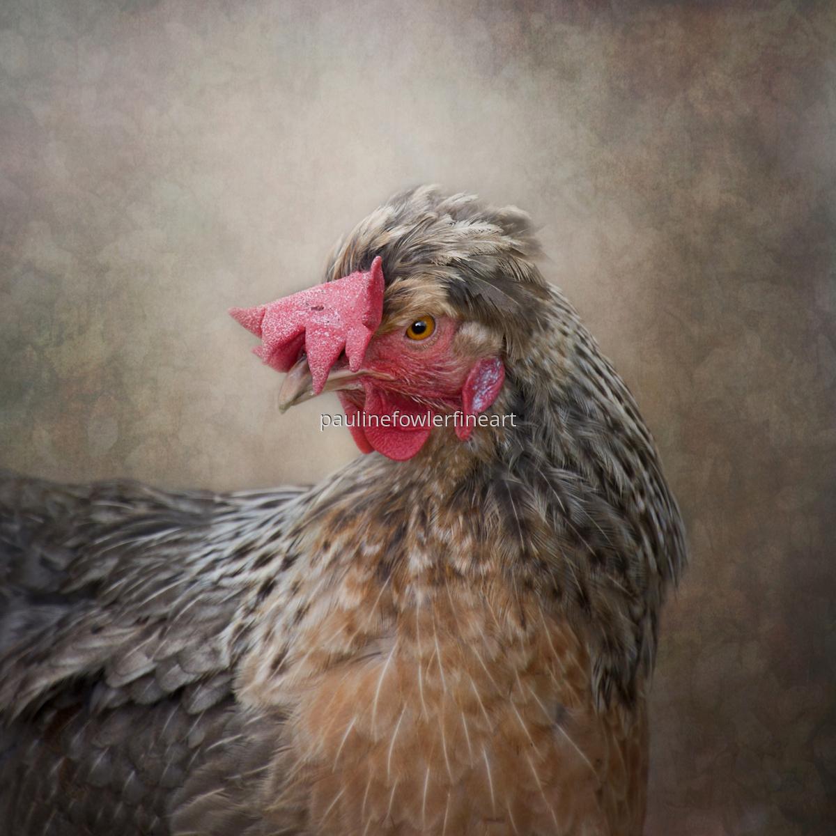 Dorking Chicken (large view)