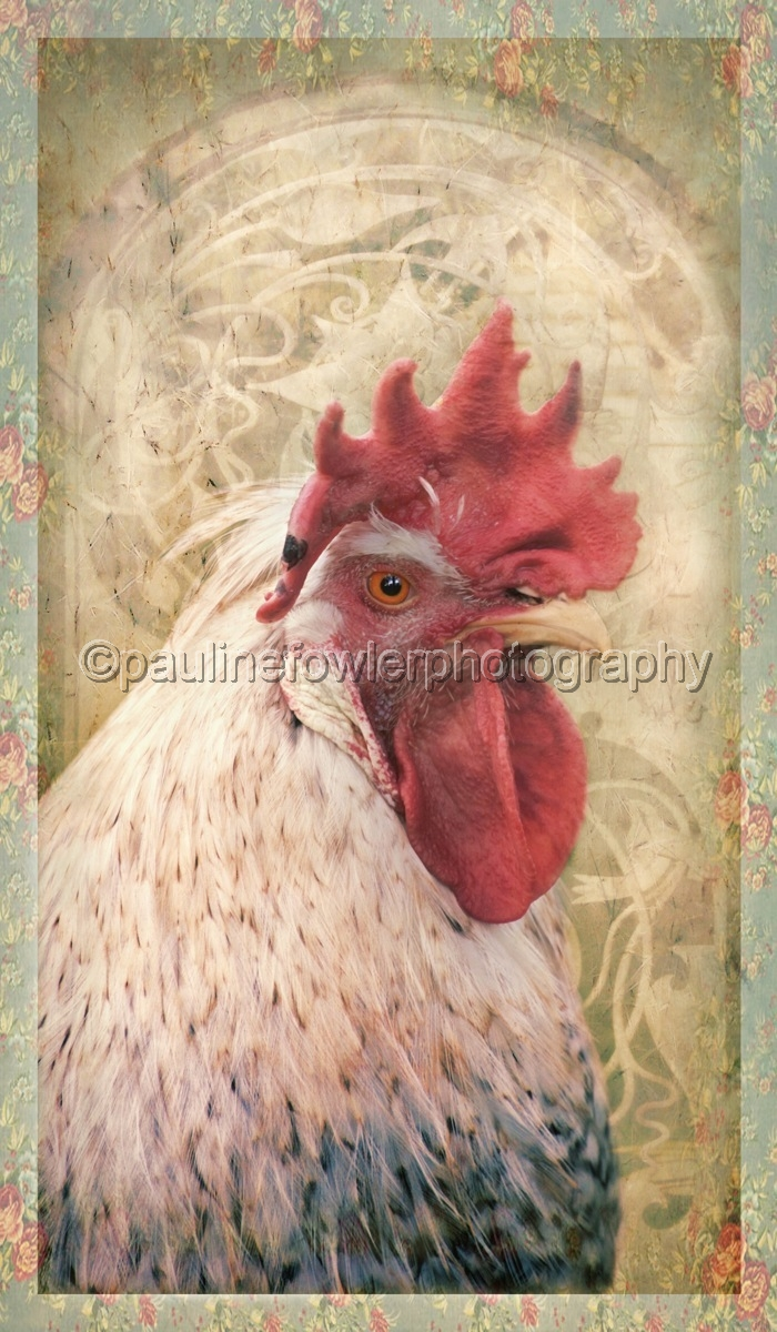 Portrait of a rooster in a floral frame (large view)