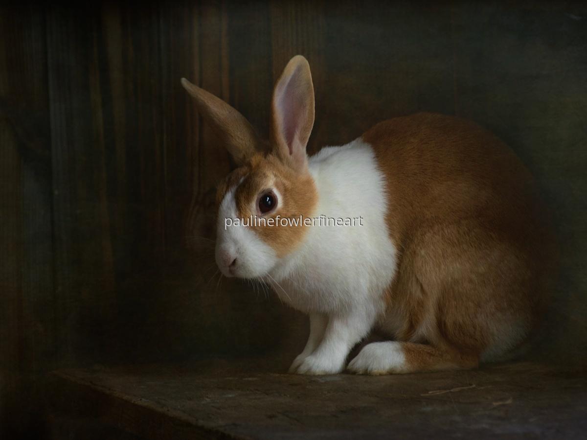 Rabbit (large view)