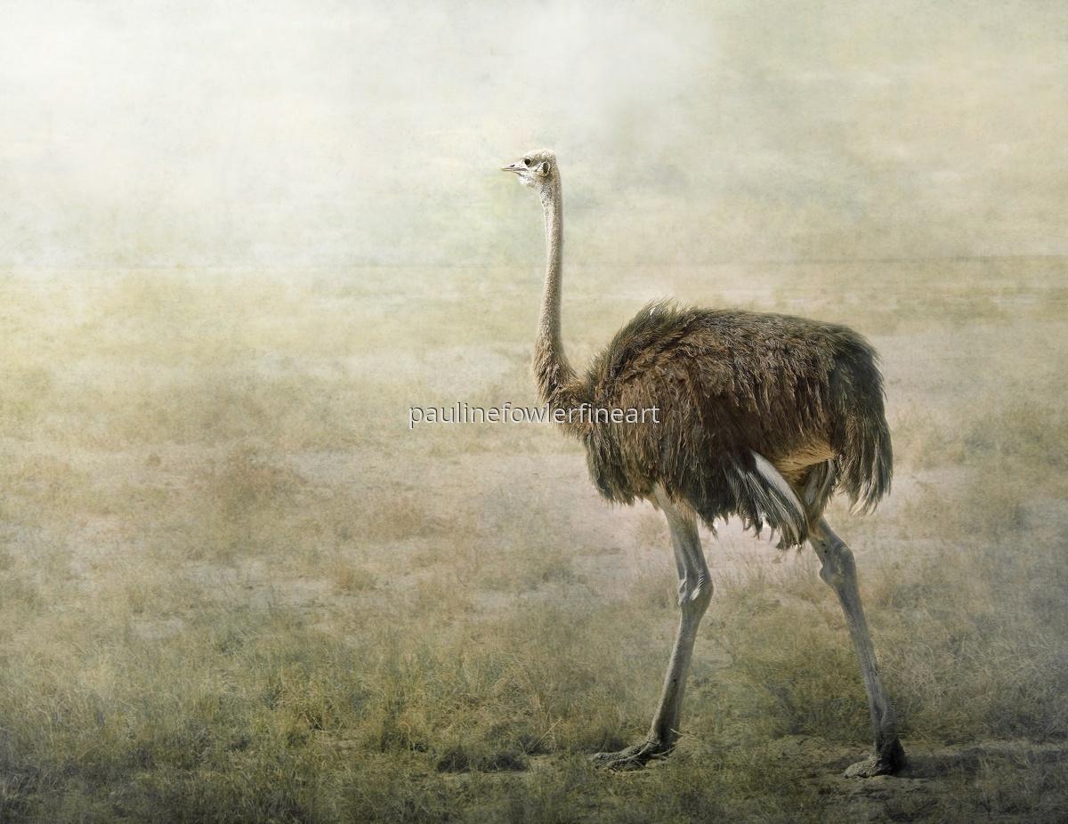 The lonely Ostrich (large view)