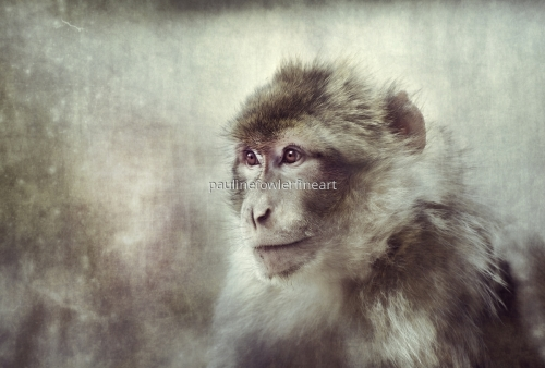 Snow Monkey by Pauline Fowler Photography