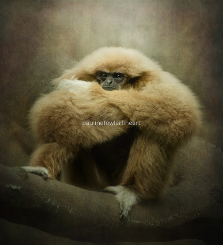 Study of a Gibbon - The Thinker..