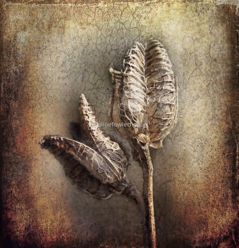 Dried seedheads by Pauline Fowler Photography