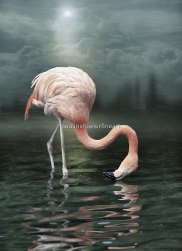 Flamingo dream..