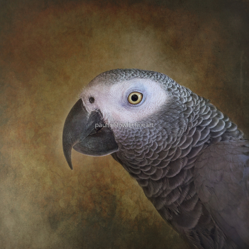 Portrait of an African Grey Parrot