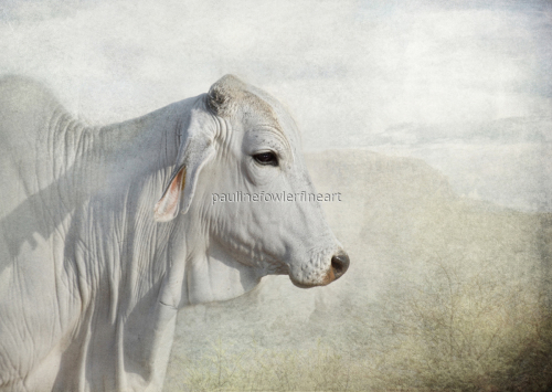 Brahman (large view)