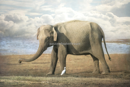 Elephant and Egret