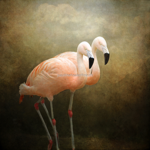 Flamingo talk by Pauline Fowler Photography