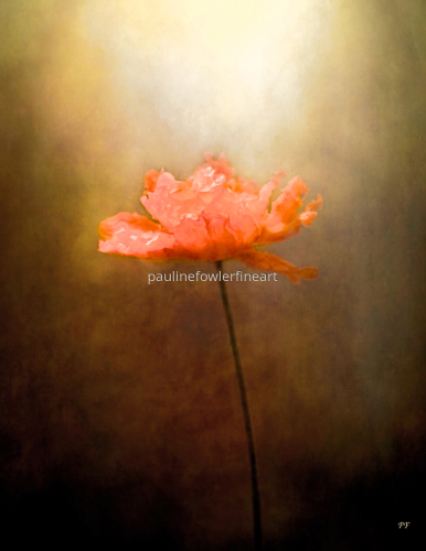 Poppy by Pauline Fowler Photography