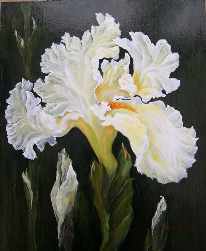 White Iris by Priscilla George