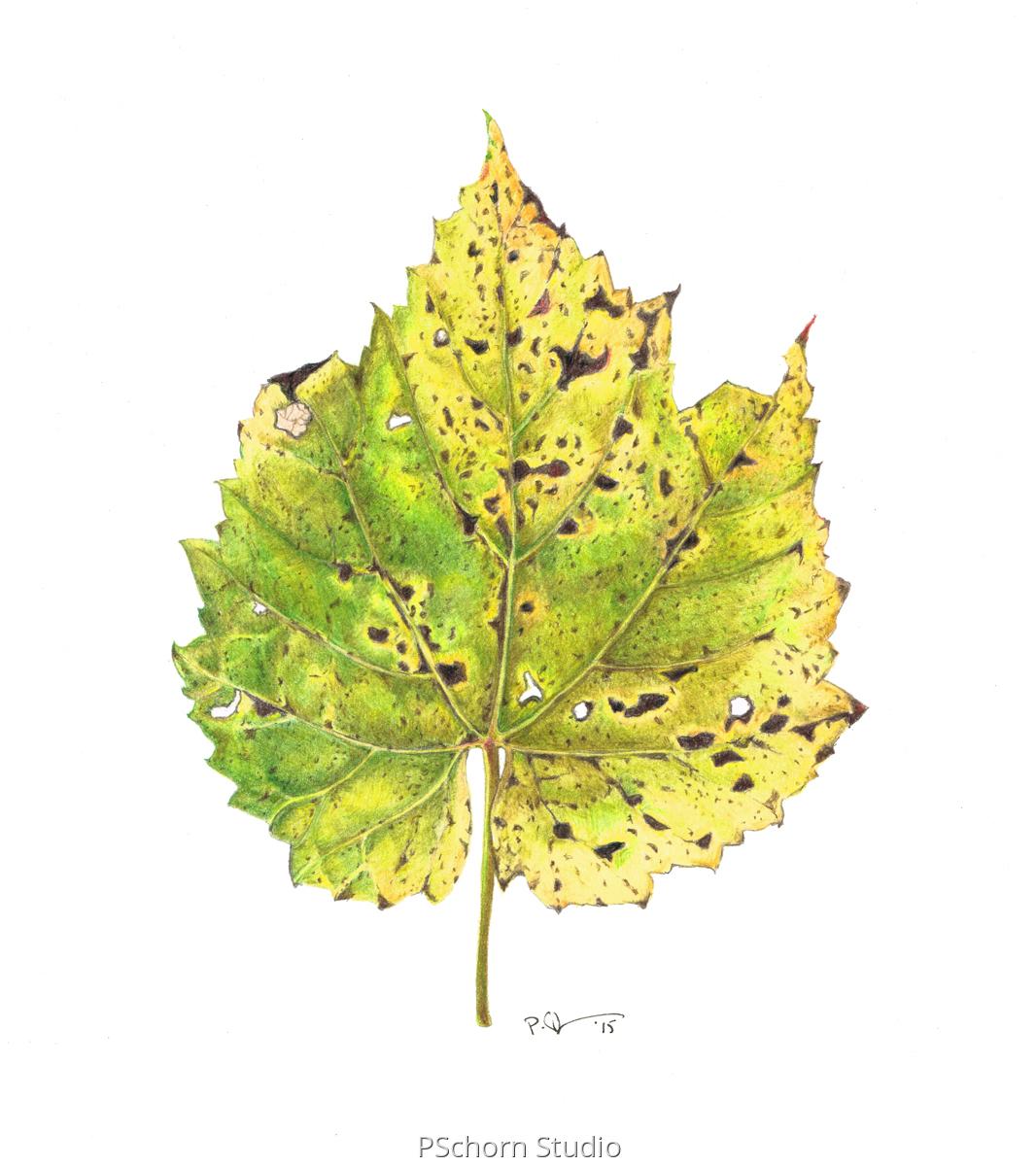 Leaf 7 (large view)