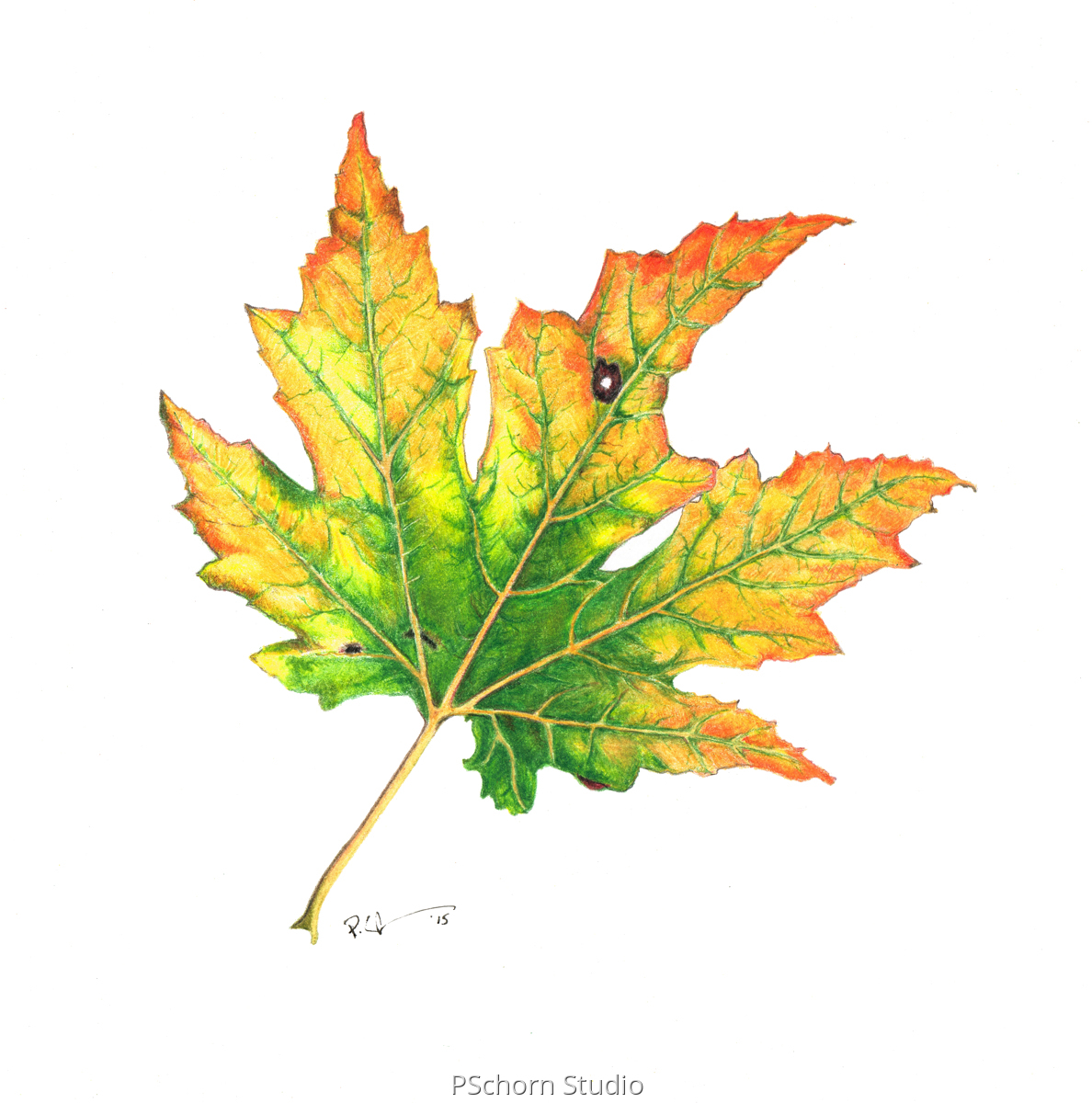Leaf 8 (large view)